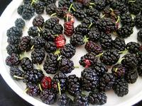 Conyers_locally_grown_mulberries